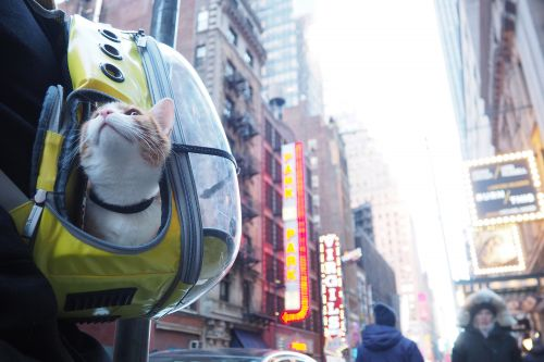 This bar-hopping cat is NYC's hot new tourist attraction