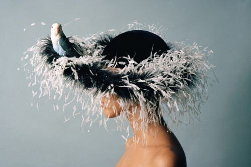 Why We Love the Unapologetic Campness of Feathers