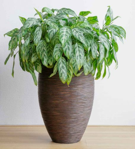 Low-Light-Loving Houseplants That Can Survive in Sun-Deprived Homes