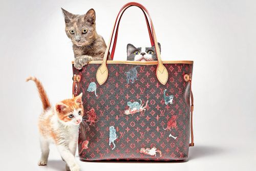 Meet the adorable kittens modeling Louis Vuitton's new 'Catogram' collection