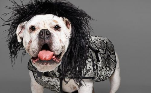 Fashion names design canine couture for charity