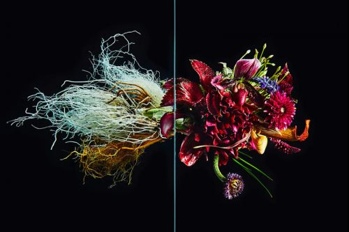 """Azuma Makoto's """"Undersurface Flowers"""" Reveals the Wild Side of Perfect Blossoms"""