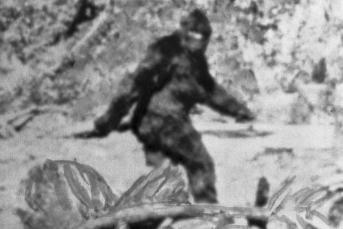 Is Bigfoot a wild pot farmer myth - or a cold-blooded serial killer?