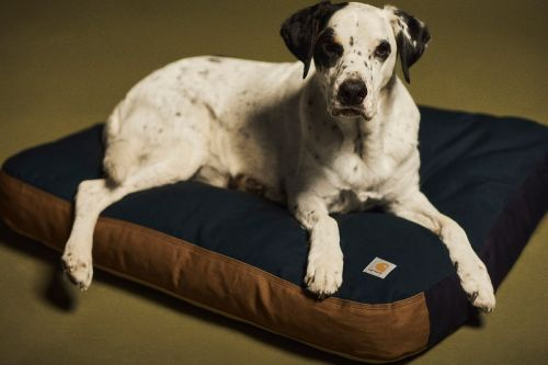 Carhartt WIP Launches Valiant Program With Dog Bed and Spalding Basketball