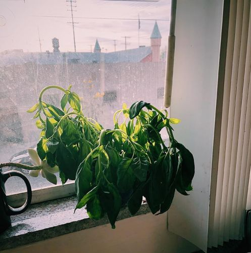 One Writer's Quest to Find an Unkillable Kitchen Plant